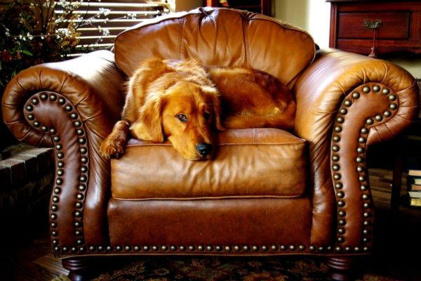 How to Cover Repair Scratches on Leather Furniture